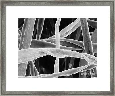 Cotton Fibers Framed Print by Science Source