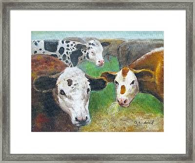3 Cows Framed Print