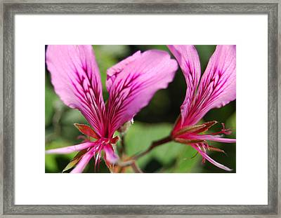 3-d Flowers Framed Print by Jean Booth