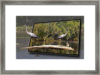 3-d Great Blue Crane Framed Print by Michael Whitaker