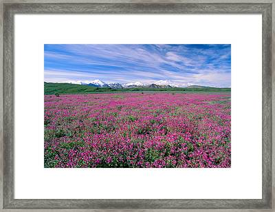 Denali National Park Framed Print by John Hyde - Printscapes