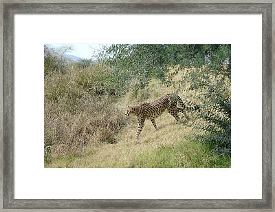 Framed Print featuring the photograph Descent by Fraida Gutovich