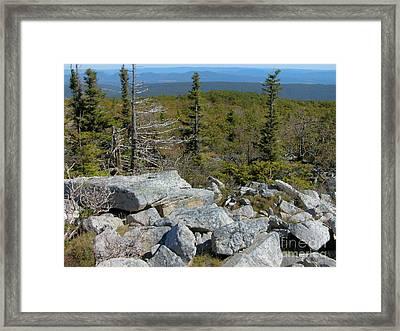 Dolly Sods Wilderness Framed Print by Thomas R Fletcher