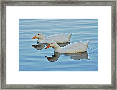 Framed Print featuring the photograph 3- Ducks by Joseph Keane