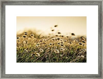Evening Framed Print by Nailia Schwarz