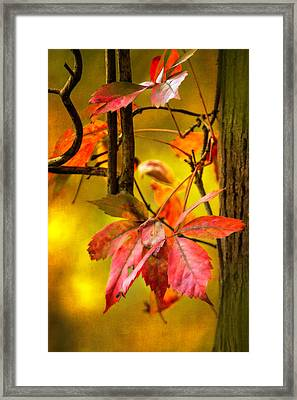 Framed Print featuring the photograph Fall Colors by Eduard Moldoveanu