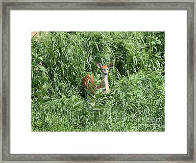 Fawn In The Grass Framed Print