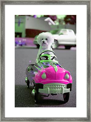 Fifi Goes For A Ride Framed Print