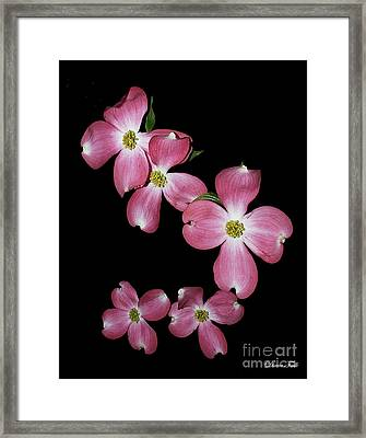 Flower Framed Print by Diane Falk
