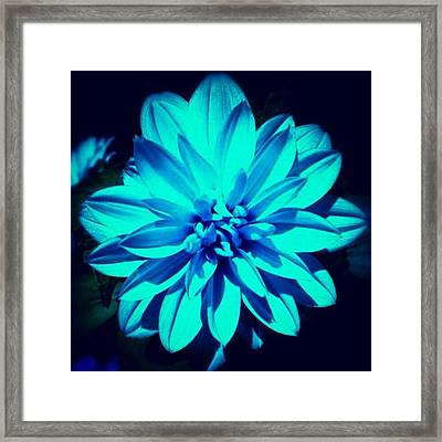 Flower Framed Print by Katie Williams