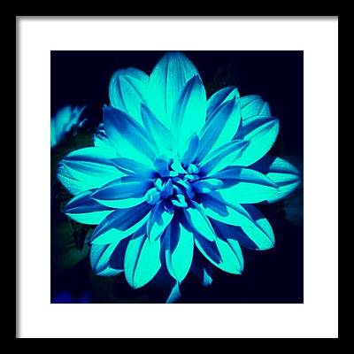 Petals Framed Prints