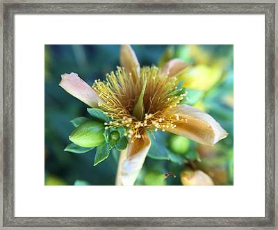 Flower Framed Print by Maxim Tzinman
