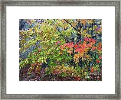Forks Of Cranberry Trail Framed Print by Thomas R Fletcher