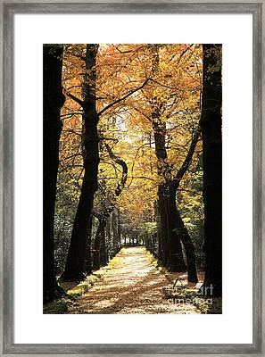 Ginkgo Biloba Trees Framed Print by Gaspar Avila