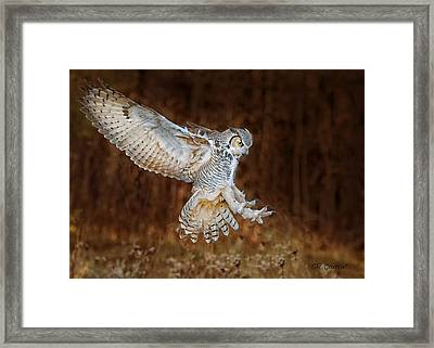 Great Horned Owl Framed Print by CR Courson