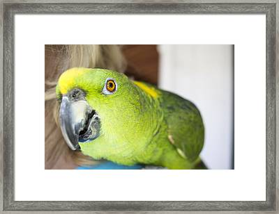 Green And Yellow Parrot At A Community Gathering Framed Print by Malisa Nicolau