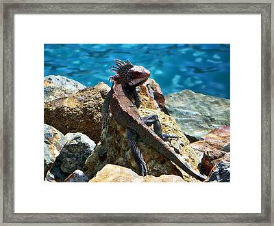 Green Iguana Framed Print by Anthony Dezenzio