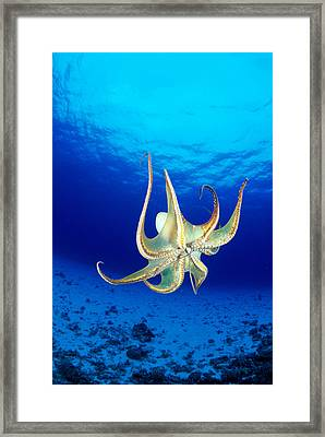 Hawaii, Day Octopus Framed Print by Dave Fleetham - Printscapes