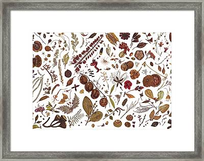 Herbarium Specimen Framed Print by Rachel Pedder-Smith