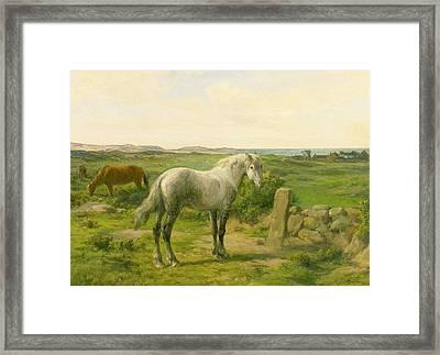 Horses Near The Seaside Framed Print