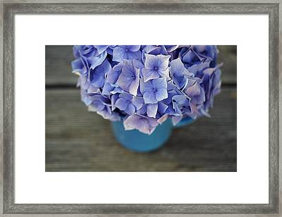 Hortensia Flowers Framed Print by Nailia Schwarz