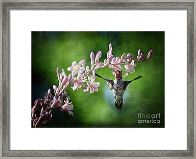 Hummingbird  Framed Print by Saija  Lehtonen