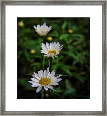 Framed Print featuring the photograph 3 In A Row by Cherie Duran