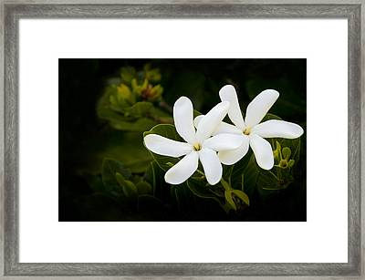 Jasmine Duo Framed Print