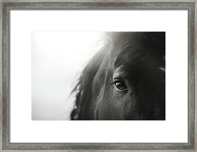 Jay Framed Print