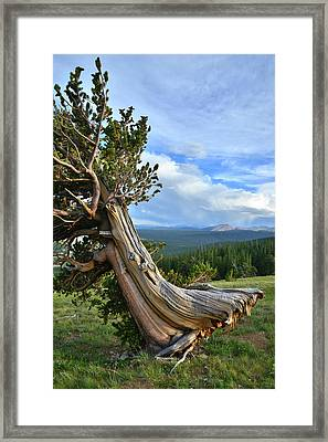 Leaning Tower Framed Print by Ray Mathis