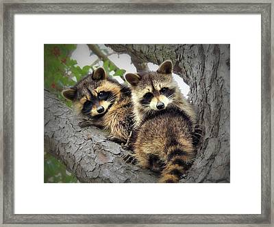 3 Little Rascals Framed Print by Laura Ragland