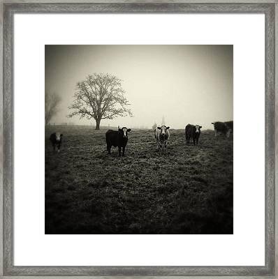 Livestock Framed Print by Les Cunliffe