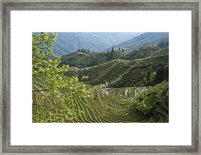 Longsheng Rice Terraces Framed Print by Michele Burgess