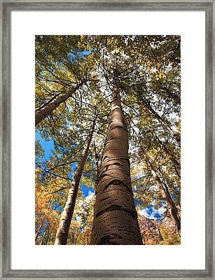 Looking Up Framed Print by Marilyn Hunt