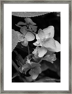Magnolia Plantation And Gardens Collection Framed Print by DigiArt Diaries by Vicky B Fuller