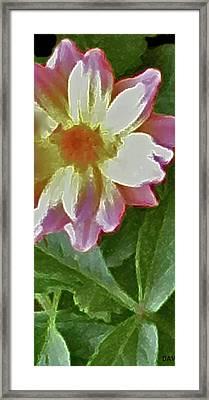 Mix Or Match Flowers  Framed Print by Debra     Vatalaro