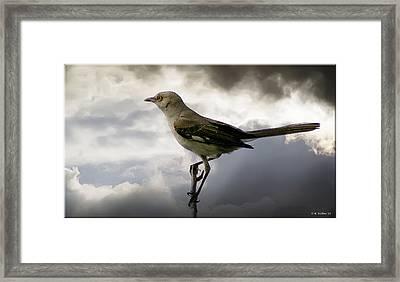 Mockingbird Framed Print by Brian Wallace