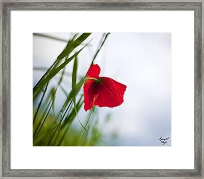 Mohnblume Framed Print