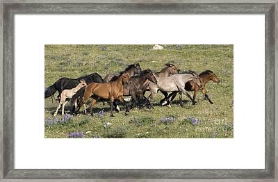 Mustangs In Nevada Framed Print by Jean-Louis Klein & Marie-Luce Hubert