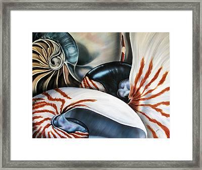 3 Nautilus Framed Print