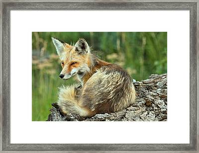 On The Lookout Framed Print by Adam Jewell