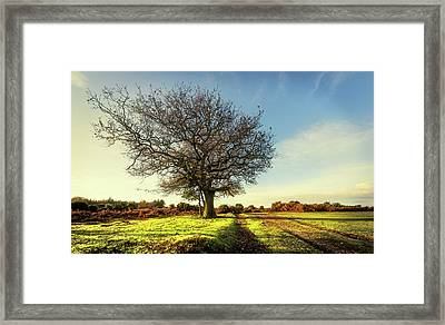 One Tree Framed Print