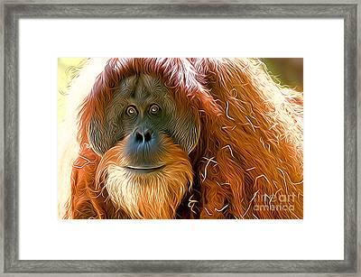 Orangutan  Framed Print by Andrew Michael