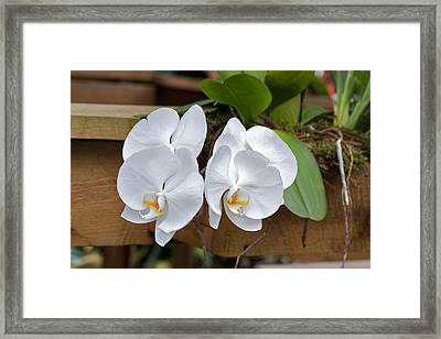 Orchid Framed Print by Theo Tan
