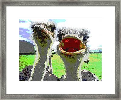 Ostrich Flightless Bird Framed Print