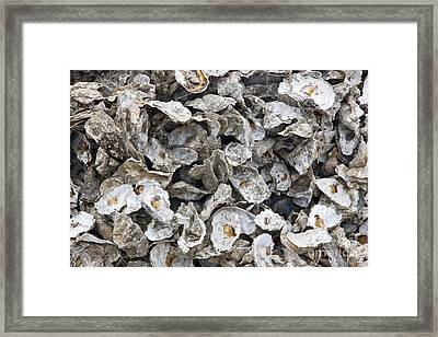 Oyster Shells Framed Print by Inga Spence