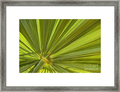 Palm Leaf Framed Print