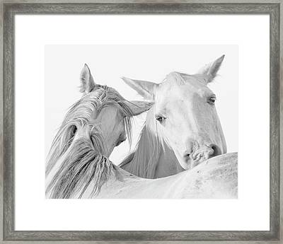 Pals Framed Print by Ron  McGinnis