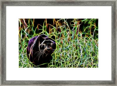 Panther Collection Framed Print