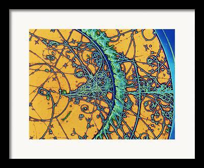 Magnified Image Framed Prints